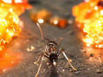Gold-Digging Ant