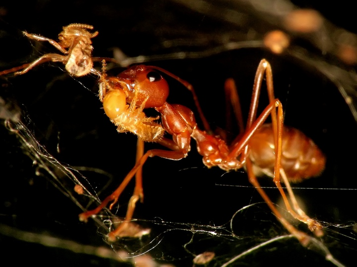 Ant In Food Web