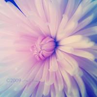 Botanica IV by GieGie