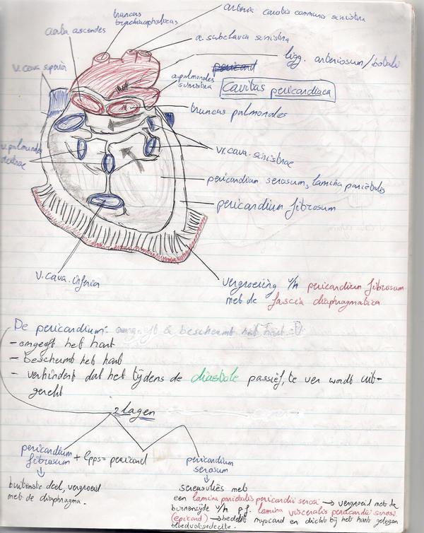 anatomy drawing: heart by j0hn-j0hn on DeviantArt