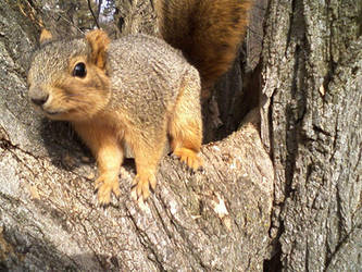 Hello, Mr. Squirrel by Mr-Wilbur