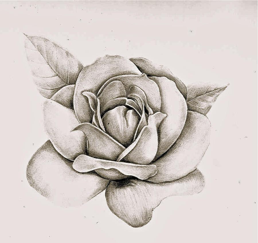 Realistic Rose by KatharineBale on DeviantArt