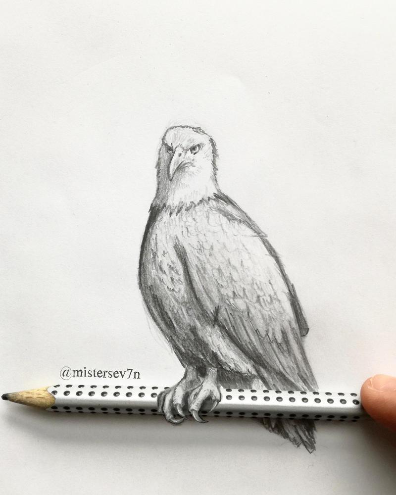 Little Bird by MisterSev7n