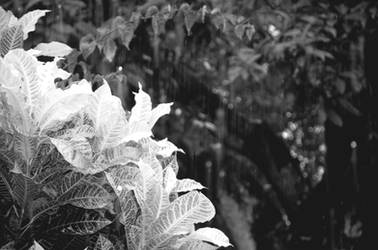 plants1 by eky09