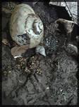 Broken Snail