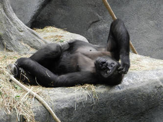Gorilla Nap Time by OsarionStudios
