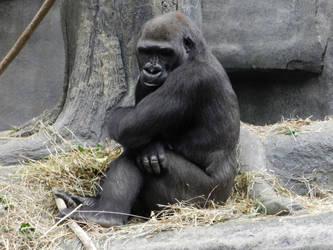 Shy Gorilla by OsarionStudios