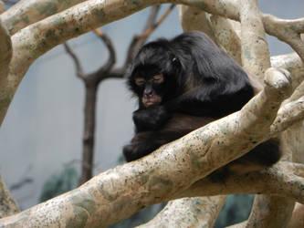 Monkey by OsarionStudios