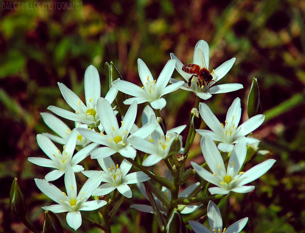 Honey by BaiMilPhotography