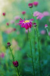 Peaceful by BaiMilPhotography