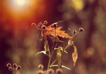 Sunshine by BaiMilPhotography