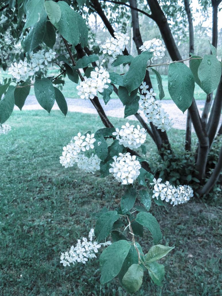 Fleurs du parc 1 by NorthAngel