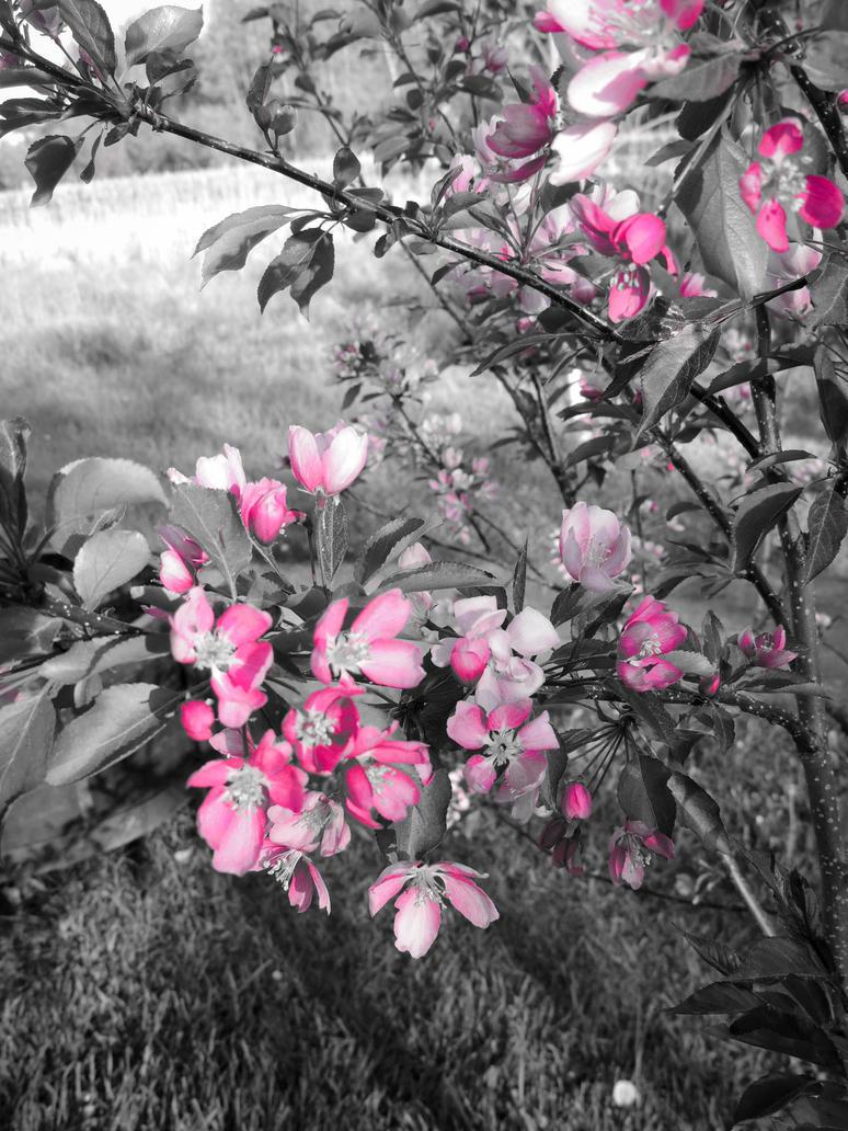 Fleurs du parc 2 by NorthAngel
