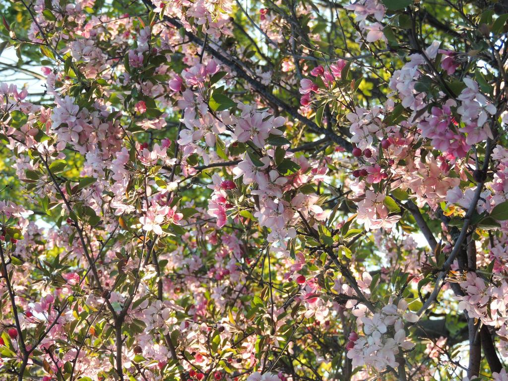 Fleurs du parc 3 by NorthAngel