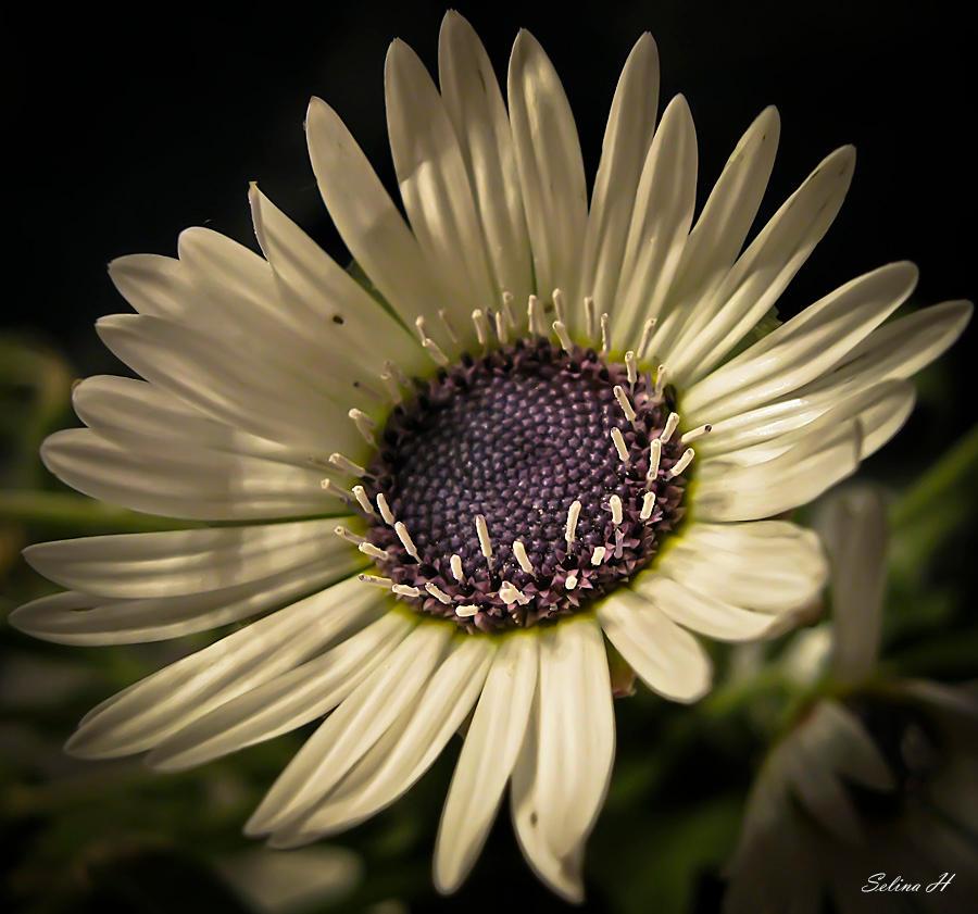 Glowing Beauty by sesam-is-open
