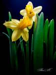 Finally Spring by sesam-is-open