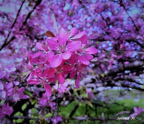 Spring in Pink by sesam-is-open