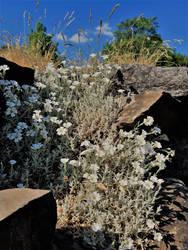Dry Stone Spring