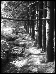 My lonely road by Aokawazu