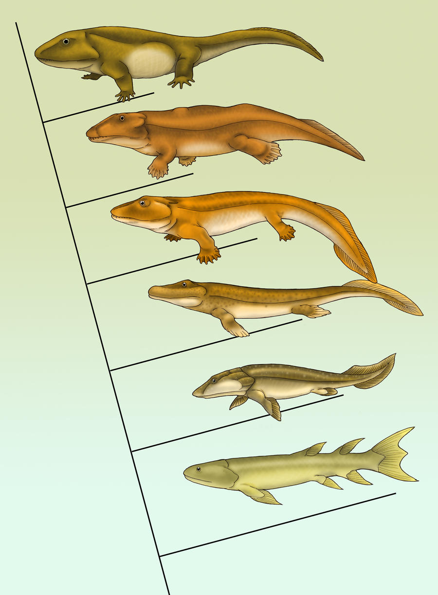 Fish fishapod tetrapod tree by eurwentala on deviantart for Did humans evolve from fish