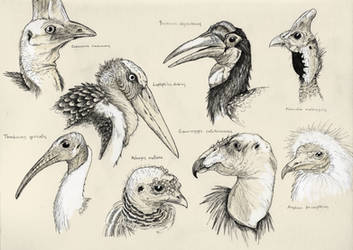 Ugly birds need love too by Eurwentala