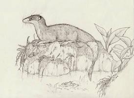 Otter Shrew by Eurwentala