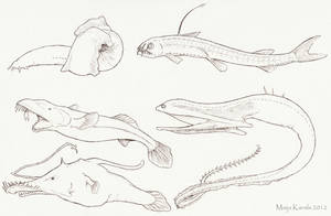 Selection of Deep Sea Fish by Eurwentala