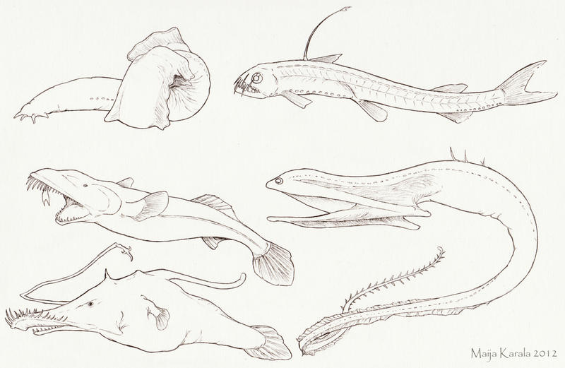 Pencil drawings of sea creatures