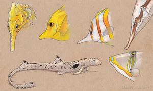 Marine Fish Make No Sense