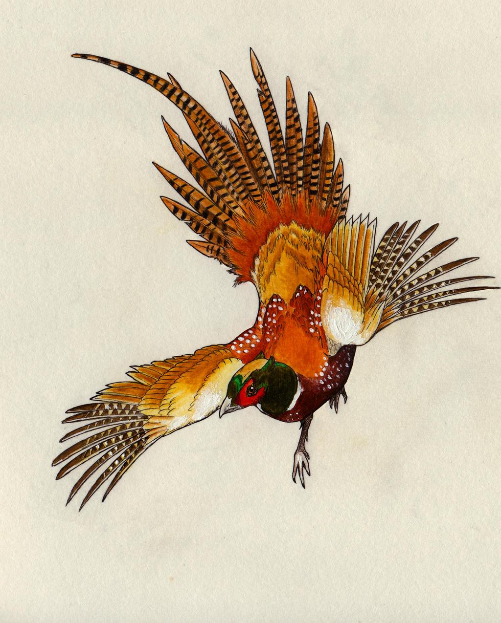 Flight of the Pheasant...
