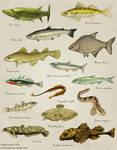 Fish of Baltic Sea