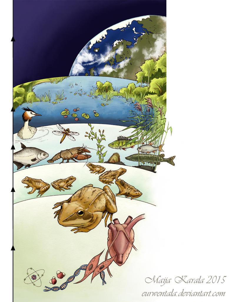 Biological Organization by Eurwentala