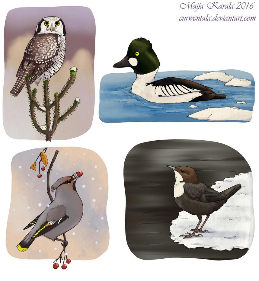Winter Birds by Eurwentala