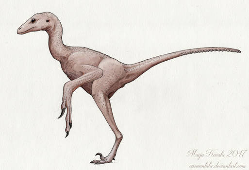Naked Anchiornis
