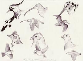 Birds of Ostrobothnia