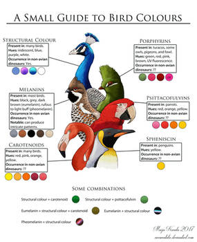 A Small Guide to Bird Colours