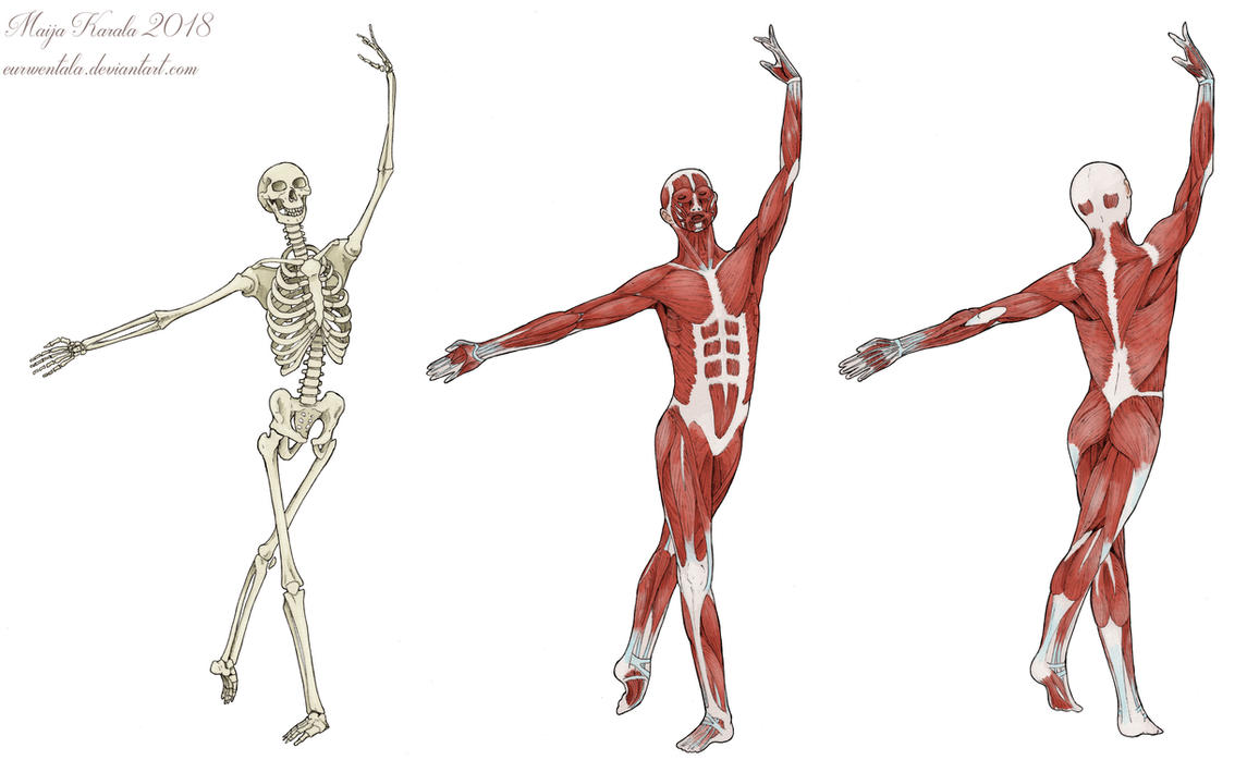 Anatomical Dancers by Eurwentala on DeviantArt