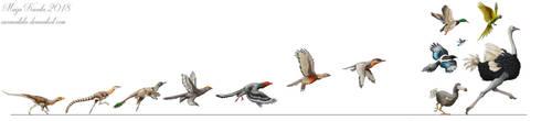 Evolution of Birds by Eurwentala