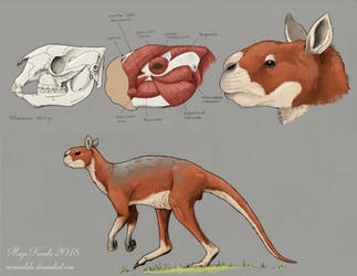 The Walking Kangaroo by Eurwentala
