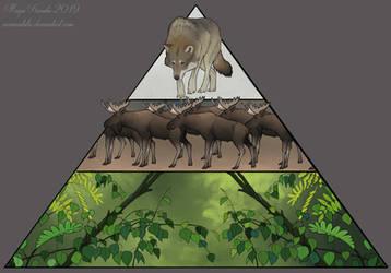 Ecological Pyramid