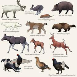 Some Finnish Wildlife