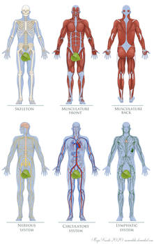 Anatomy Figures