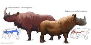 European Rhinos