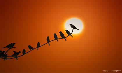 sunrise birds by regayip
