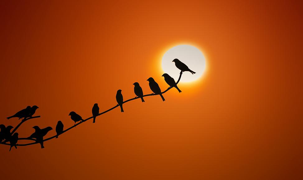 Sunrise by regayip
