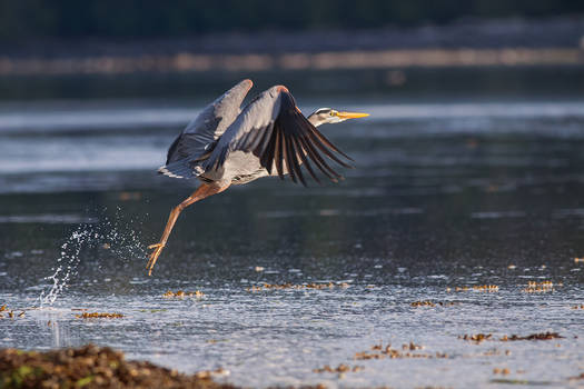 Seal Bay Birding II