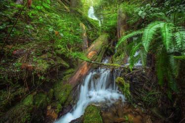 Cumberland Forest