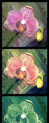 Orchid Collage by darkwerecat