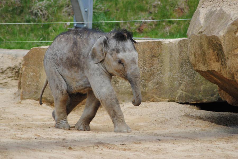 Animal Facts  Elephants  Vegan Peace