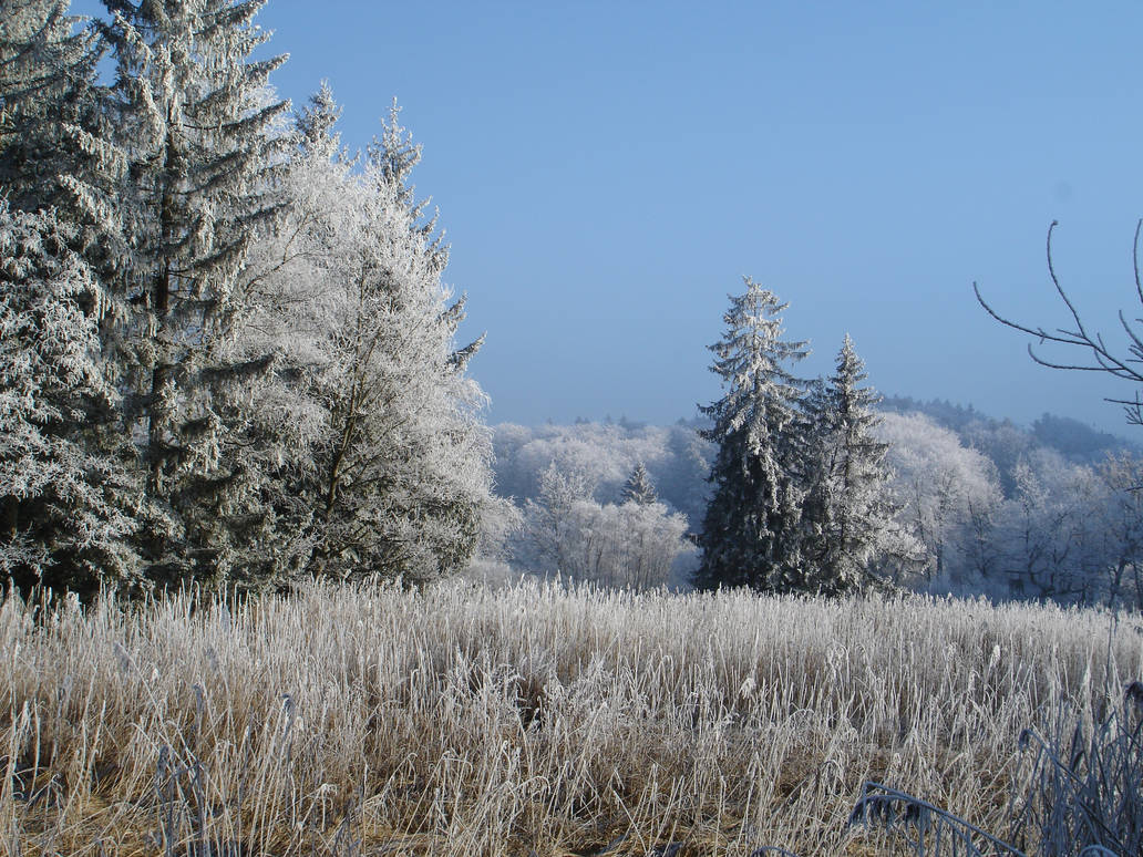 trees in frost by 8moments